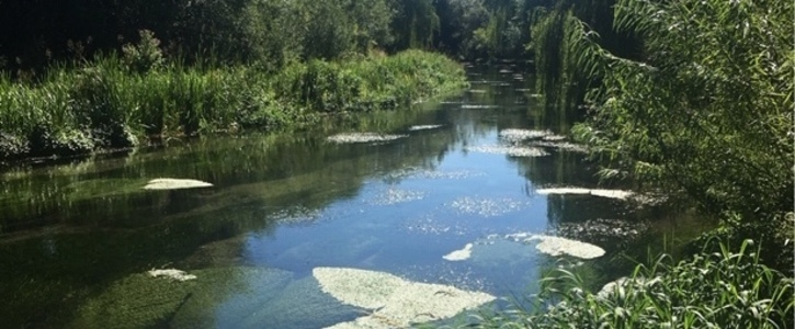 Protect the River Lambourn, one of only 4 chalk streams in the world accorded SSSI and SAC status