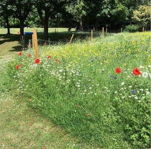 SAVE OUR WILDFLOWER MEADOW: WHITTINGTON PARK