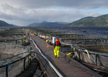 Stop Toxic Salmon Farm Chemicals Polluting Scottish Lochs