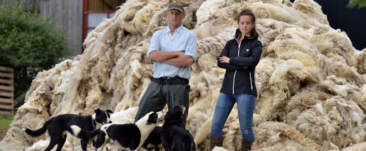 British Wool for British Insulation and Carpeting