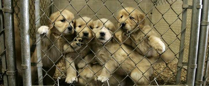 Stop the sale of puppies at pet stores and online in Aotearoa unless it can be properly regulated
