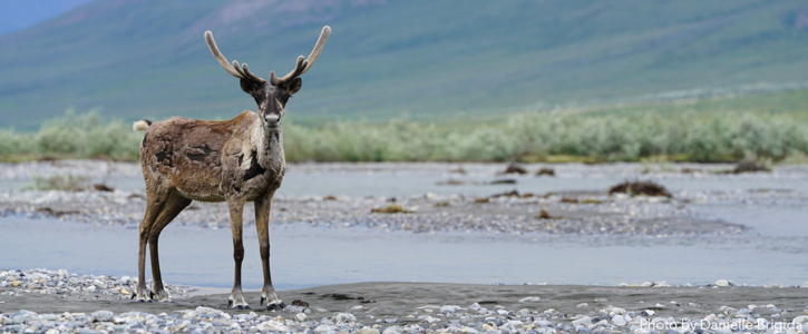 Say No to Drilling in the Arctic National Wildlife Refuge!