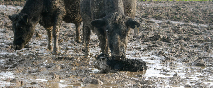 End all NZ Super Fund Investments in Intensive Winter Grazing