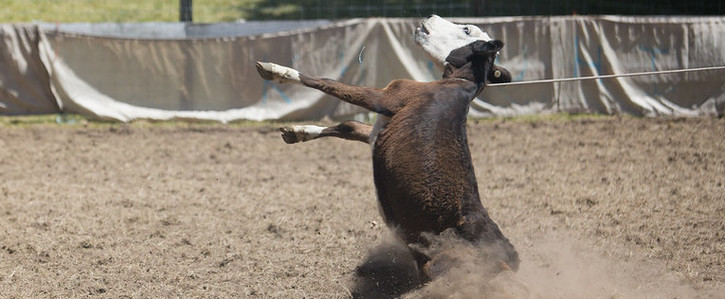 Ban the worst aspects of rodeo in Aotearoa New Zealand