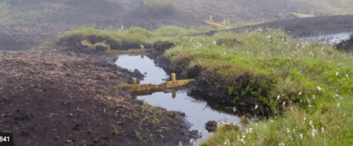 Stop Peat Removal at Lough Neagh