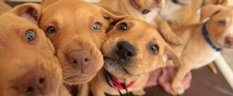 Enact a Humane Pet Store Ordinance in St. Charles, Illinois