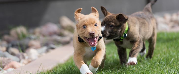 Petition to Reduce Public Health Risk by Passing a Humane Pet Store Ordinance in Oswego, Illinois