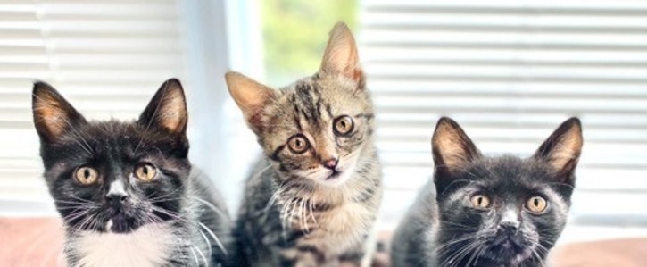 Street Cats Need our Help