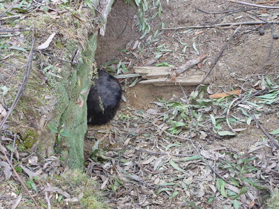 Investigate and bring to justice the killers of the wombat massacre in Glenbog State Forest