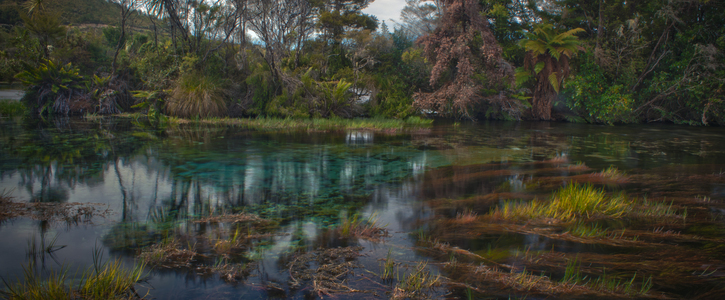 Save Te Waikoropupū Springs from the threat of synthetic nitrogen