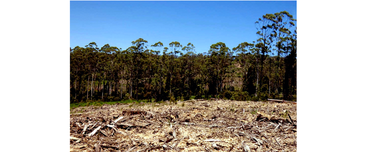 Stop native forest logging for biofuel