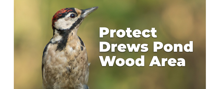 Protect the Drews Pond Wood area