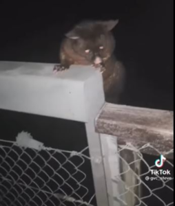 SPCA: Take action on TikTok possum puncher