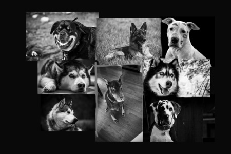 End Breed-Restrictive Insurance Practices in Illinois
