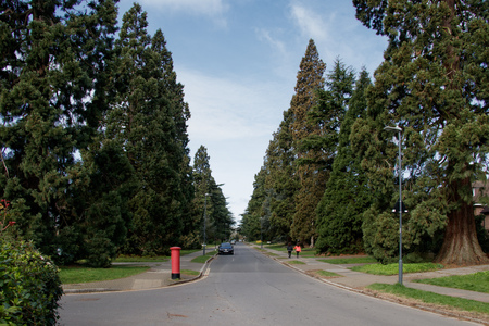 Save Canons Drive Trees