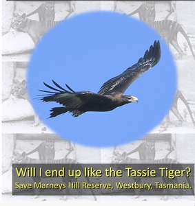 Save Marney's Hill Wildlife Nature Reserve