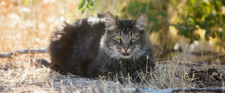 Tell the City Council: Support Lifesaving Programs for Cats