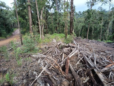Open Letter: End Logging in Ourimbah State Forest