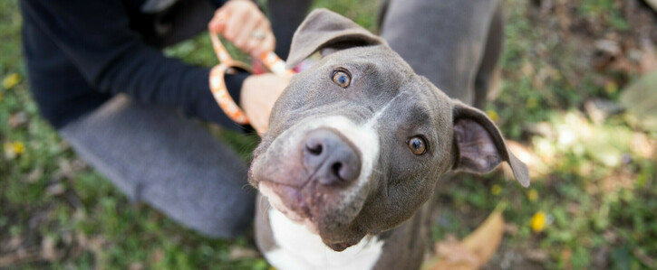 End Breed-Restrictive Insurance Practices in Louisiana