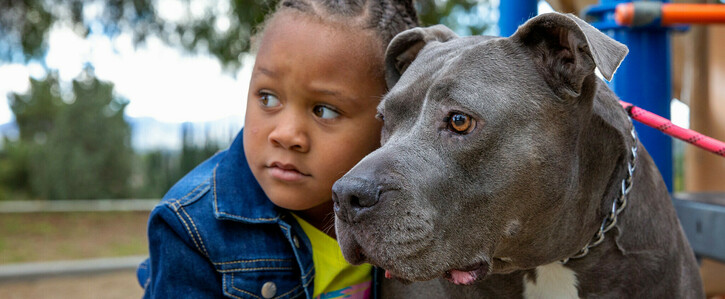 End Breed-Restrictive Insurance Practices in Wisconsin