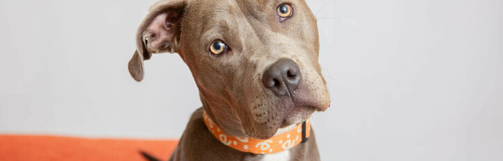 End Breed-Restrictive Insurance Practices in Maine