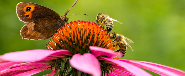 Sign the petition to make sure the Environment Bill protects Bees and Pollinators