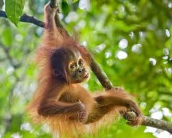 Stop Woolworths and Coles using Palm Oil in their 'Select' brand and 'Coles brand' goods