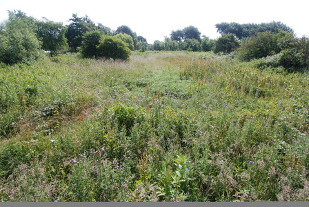 Stop development on Green Belt land at New Cut Lane
