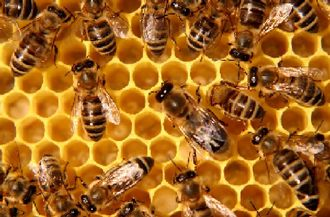 What's in our Honey?