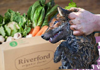 Boycott Riverford Organics until all hunting is stopped on Riverford land.