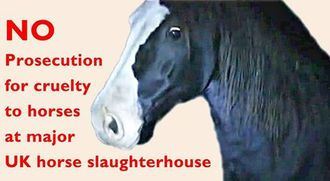 CPS - Prosecute Red Lion horse slaughterhouse.