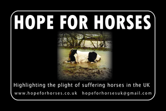 HOPE FOR HORSES  PROTECT HORSES NOW