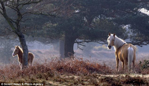 Kill Your Speed, Not a New Forest Pony