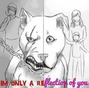 INQUIRY INTO THE EFFECTIVENESS OF BREED SPECIFIC LEGISLATION (BSL) IN QLD