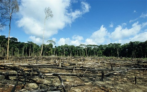 Secretary General Mr. Ban Ki Moon: We demand the restoration and protection of forests worldwide.