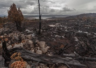 Stop the Destruction of Lapoinya Forest