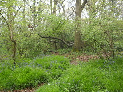 Protect the Ancient Benacre wood