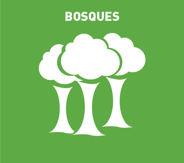 He   bosques
