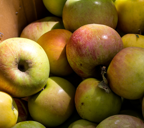 Mixed apples for cider pressing
