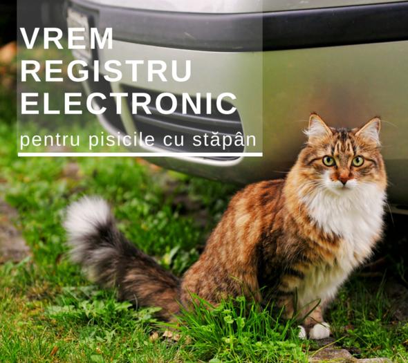 Cerem %c3%aenfiin%c8%9barea registrului electronic de eviden%c8%9b%c4%83 a pisicilor cu st%c4%83p%c3%a2n %281%29